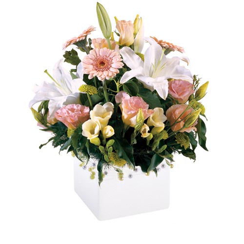 Blush - MIXED ARRANGEMENT - (mini-box)