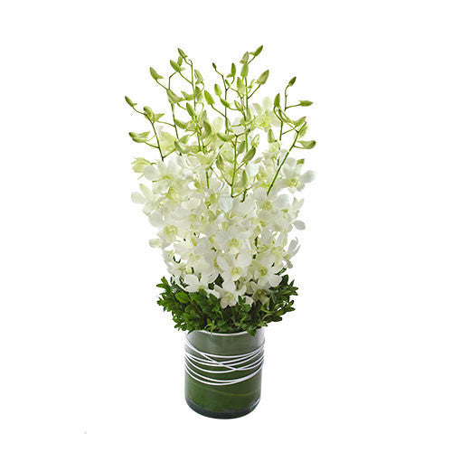 ALORA - Virtue Orchid Presentation in a Glass Vase
