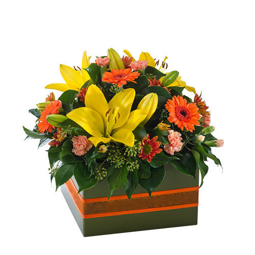 Dazzling - Mixed Box Arrangement Suitable for Home