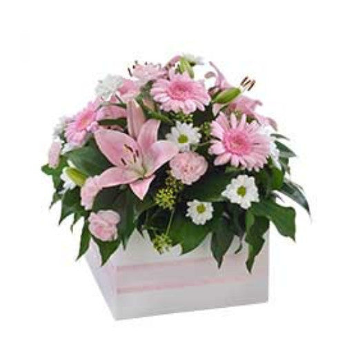 Softness - Mixed Box Arrangement Suitable for Home