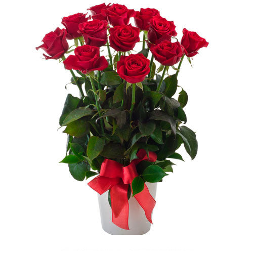 Impulse - 12 RED ROSES - (Valentine Arrangement in Ceramic Pot)