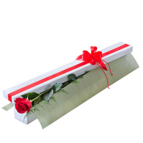 First Kiss - Single Long Stemmed Red Rose in Presentation Box