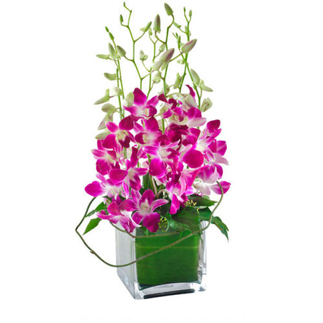 Violetta Orchids in a Glass Cube