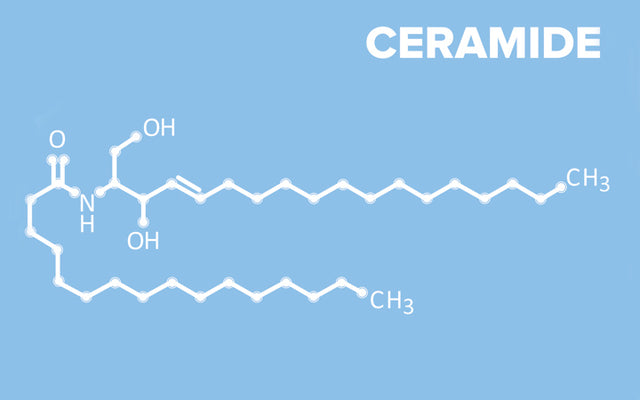 Why Should You Be Adding Ceramides To Your Skin Care?