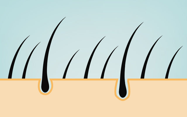 One multiple hairs follicle from growing Multiple/Two Hairs