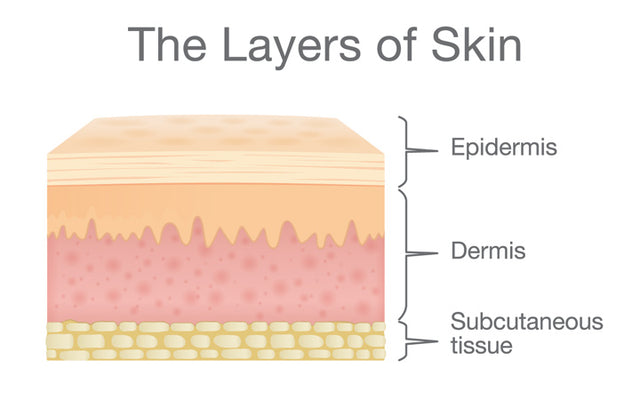Understanding The Different Layers Of Skin
