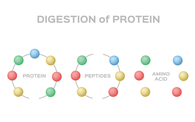 Peptides for Skin: What are Peptides & How they Help in Skincare