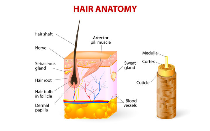 Hair anantomy with parts explained