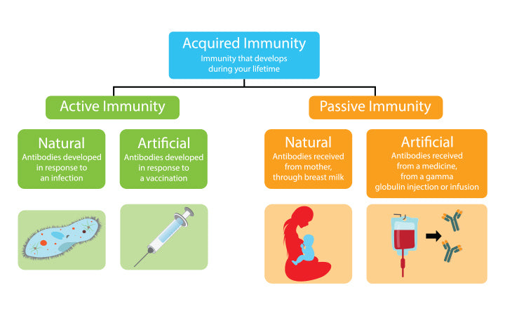 Illustration of biology-medical-acquired-immunity