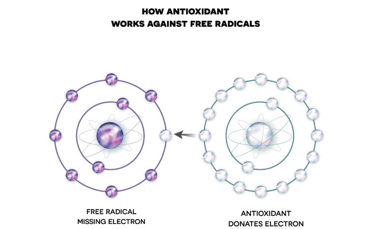 antioxidant-works-against-free-radicals