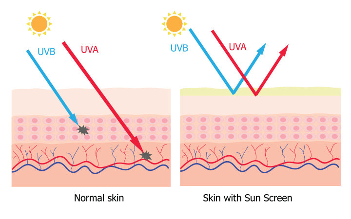 infographic about sunscreen lotion protect human