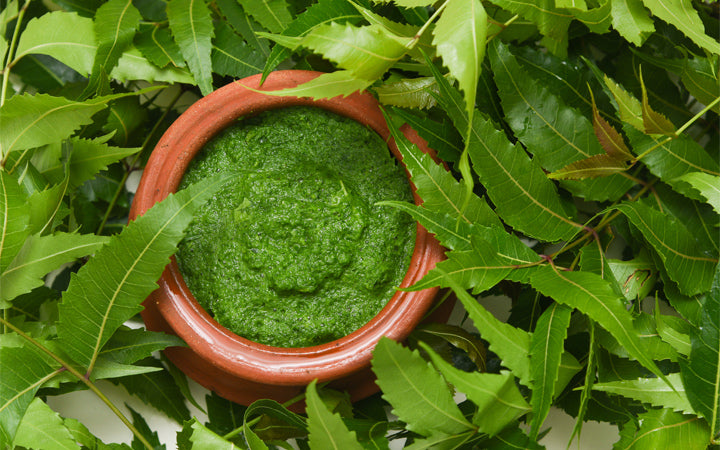 neem leaves with ground paste using as treatment
