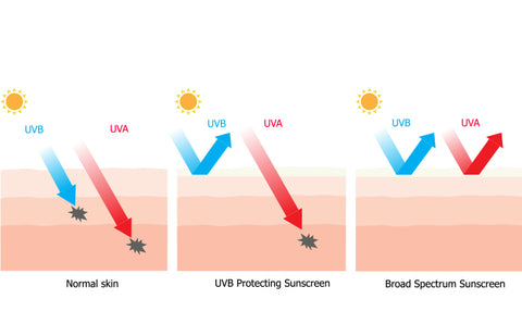 A broad-spectrum sunscreen protects you from UVB and UVA rays of the sun