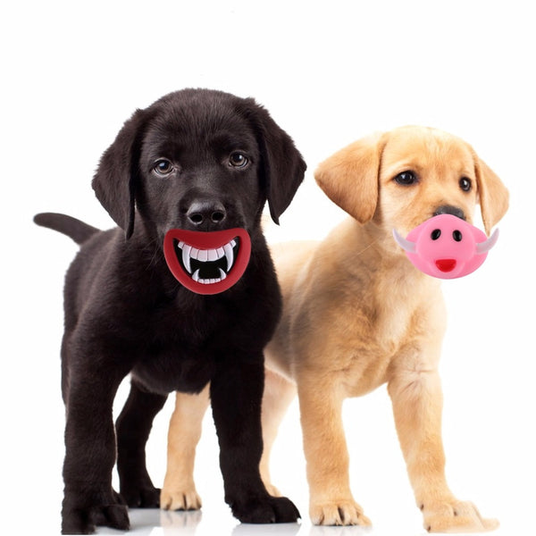 Squeaky Chew Toys (Teeth/Pig Nose)