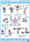 Chartex Products - Fitness, Health, Wellness, Anatomy Posters