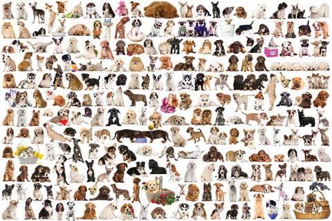 The World of Dogs Poster (200 Furry Pets) - Eurographics Inc.
