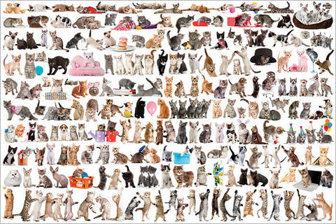 World of Cats Poster (200 Fuzzy Felines!) - Eurographics Inc.