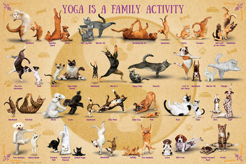 "yoga dogs and cats ""yoga is a family activity"" fitness"