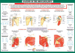 Anatomy of the Shoulder Joint Health and Fitness Wall Chart Poster - Chartex Ltd.