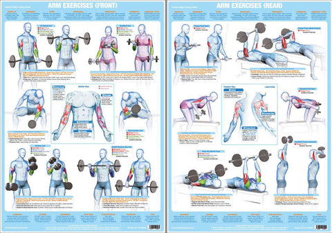 Arm Exercises (Front and Rear) Weight Training Fitness Instructional Wall Chart 2-Poster Set - Chartex Products