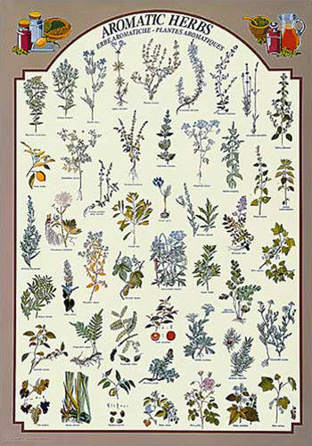 Aromatic Herbs (48 Varieties) Cooking Kitchen Wall Chart Poster - Eurographics Inc.
