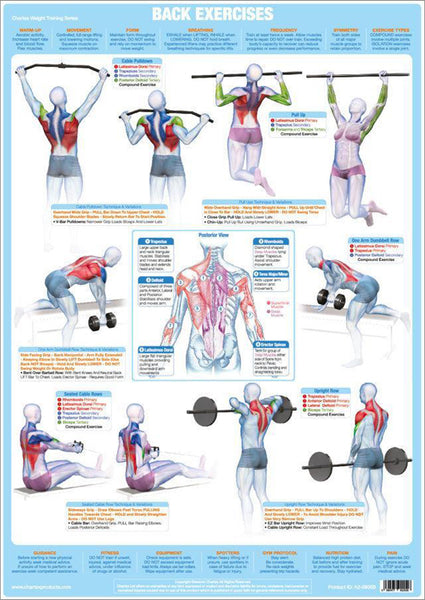 Back Exercises Weight Training Fitness Instructional Wall Chart Poster - Chartex Products