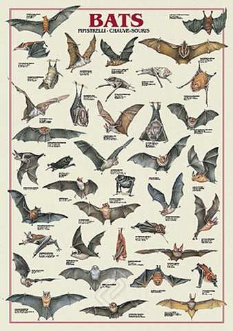 Bats Animal Zoology Wall Chart Poster - Ricordi Arte Group