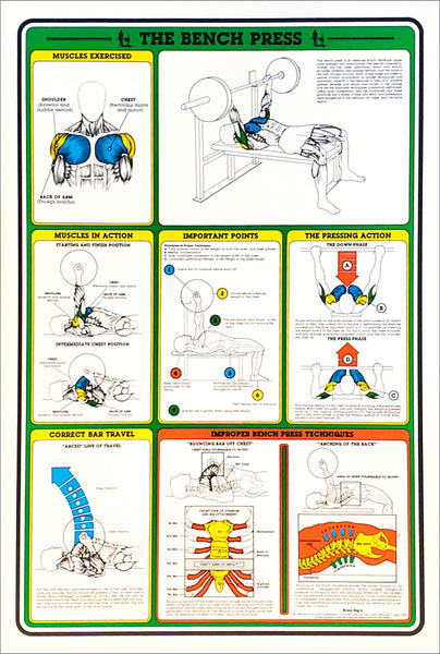 The Bench Press Professional Fitness Instructional Workout Wall Chart Poster - Fitnus Posters Inc