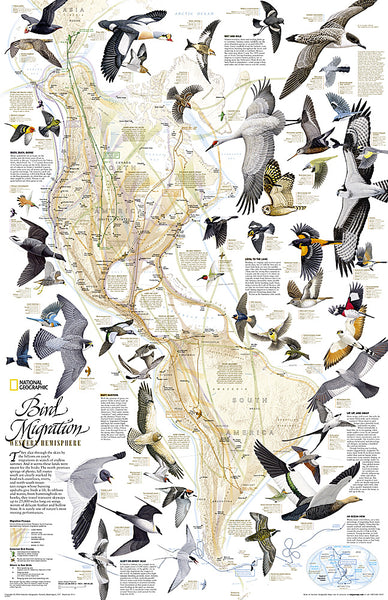 Bird Migration of the Western Hemisphere National Geographic 20x31 Wall Map Poster - NG Maps