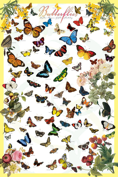 The Butterflies Poster (70 Species) Lepidopterology Wall Chart Poster - Eurographics Inc.