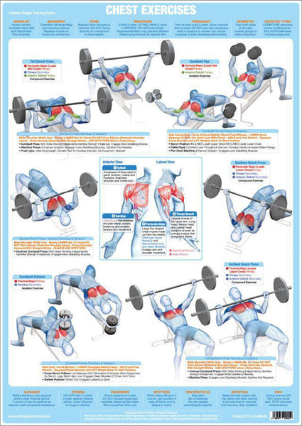Chest Exercises Weight Training Fitness Instructional Wall Chart Poster - Chartex Products