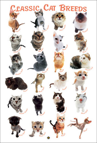 Classic Cat Breeds 24 Felines Poster (Hana Deka Club Photography) - Eurographics Inc.