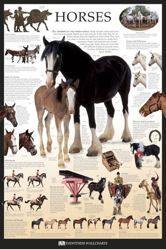 Horses Educational Poster - DK Eyewitness Wallcharts/Pyramid