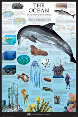 The Ocean Educational Poster - DK Eyewitness Wallcharts/Pyramid
