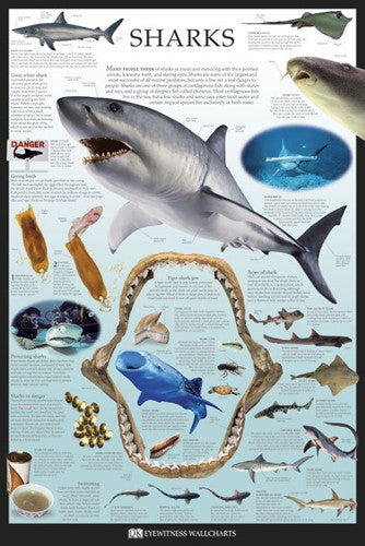 Sharks Educational Poster - DK Eyewitness Wallcharts/Pyramid