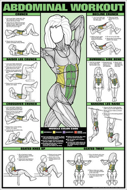 CO-ED Abdominal Workout Professional Fitness Wall Chart Poster - Fitnus Corp.