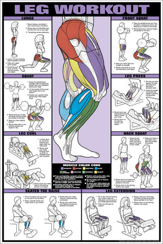 co ed leg workout professional fitness gym wall chart poster