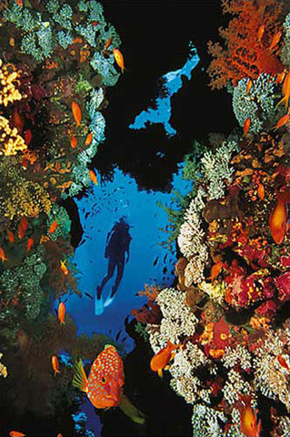 Scuba Diving in Beautiful Coral Reef Poster- Eurographics Inc.