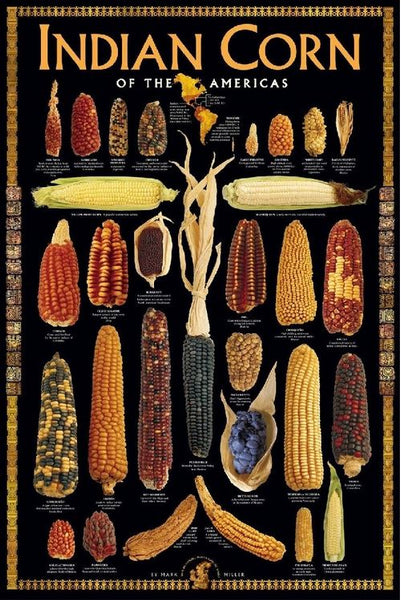 Indian Corn of the Americas Poster Wall Chart by Mark Miller - American Image Collection