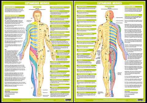 Human Anatomy Origin of Cutaneous Nerves Physiotherapy 2-Poster Combo - Chartex Ltd.
