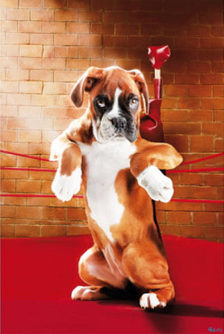 Boxer Dog in the Boxing Ring Poster - Wizard & Genius