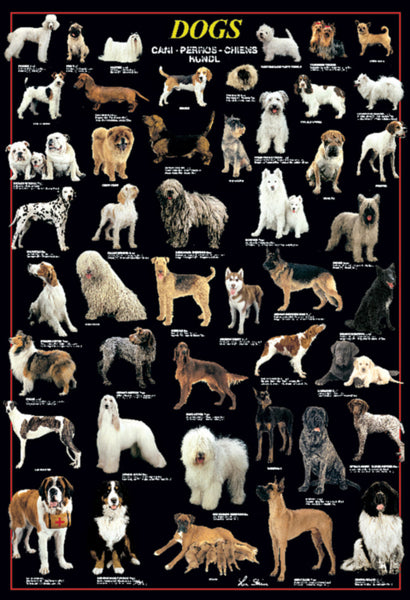 Dog Breeds 46 Canines Poster (Lisa Stein Photography) - Ricordi Arte Group