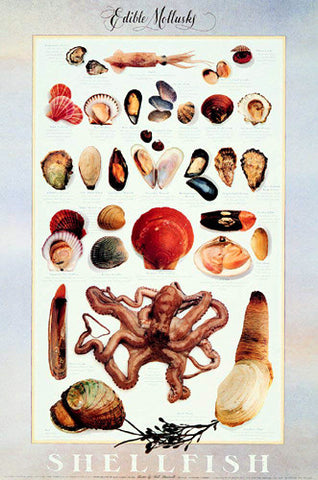 "Shellfish ""Edible Mollusks"" Wall Chart Poster by Bill Marinelli - Celestial Arts"