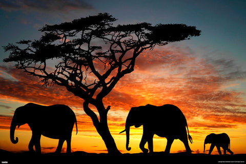 Elephant Family in Africa at Sunset Animal Kingdom Beauty Poster - Pyramid America