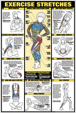 Women's Exercise Stretches Stretching Professional Fitness Wall Chart Poster - Fitnus Corp.
