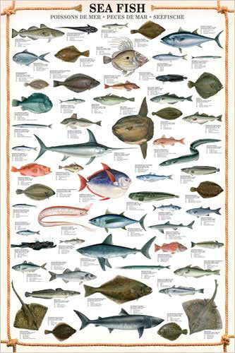 Sea Fish Wall Chart (59 Saltwater Species) Poster - Eurographics