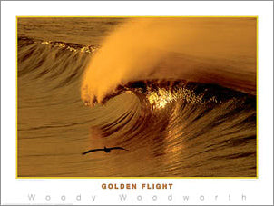 "Surfing ""Golden Flight"" by Woody Woodworth Poster Print - Creation Captured"