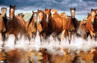 Herd of Horses Crossing a Stream Poster - TIL Inc.