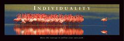 "Pink Flamingos ""Individuality"" Motivational Poster - Front Line 12x36"