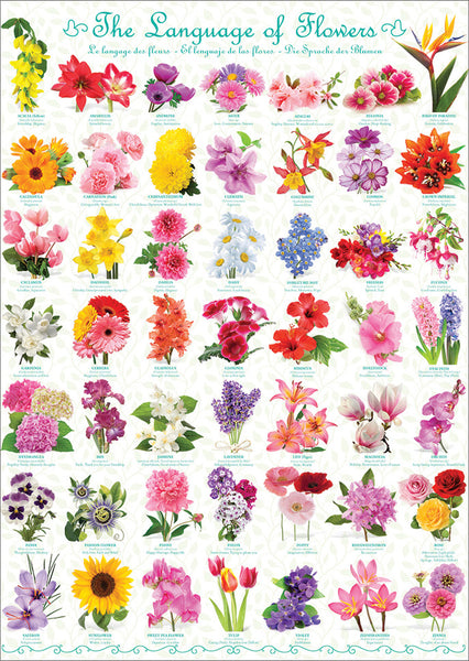 The Language of Flowers Poster (49 Beautiful Floral Varieties) - Eurographics Inc.